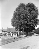 Wellesbourne.  Stag's Head and chestnut tree